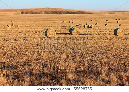 Barrels of Hay