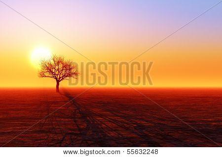 trockenen Baum silhouette