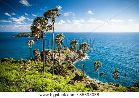 Seaview & palm trees