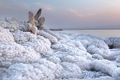 Wooden Branch Covered With Salt In Dead Sea, Jordan