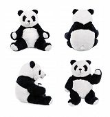 stock photo of stuffed animals  - Teddy panda bear - JPG