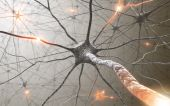stock photo of nerve cell  - Inside the brain - JPG
