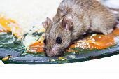 image of dead mouse  - Mouse captured in a mouse trap isolate on white - JPG