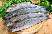 image of mullet  - Fresh sea grey mullet with green rocket leaves ready to cooked