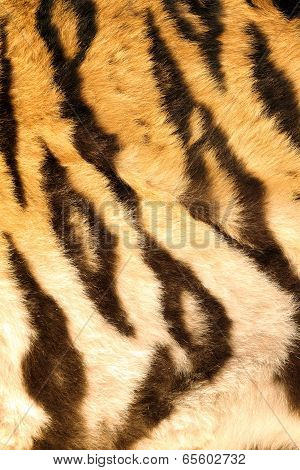 Beautiful Dark Stripes On Tiger Furr