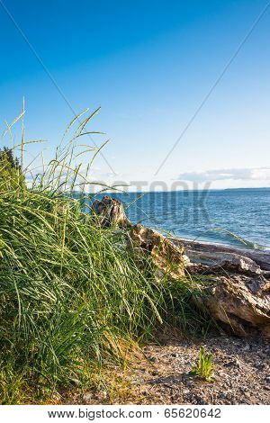Beach Grass Driftwood