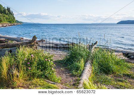 Beach Natural Vegetation Driftwood