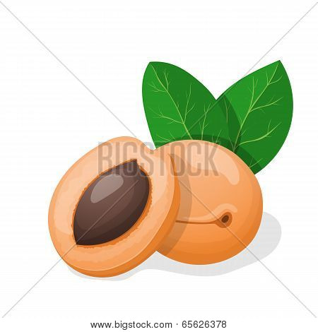 Vector Illustration. Apricots With Leaves.