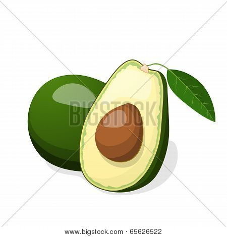Avocado Vector Isolated On White Background.