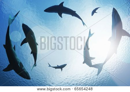 School of sharks circling from above