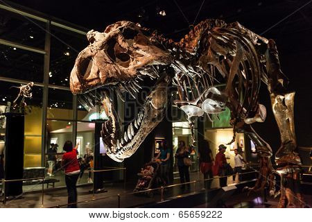 Dinosaur Exhibits At Royal Tyrrell Museum In Drumheller, Canada