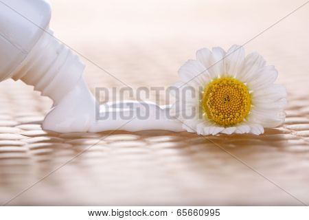Toothpaste squeezed from tube, chamomile flower, close-up, on bright background