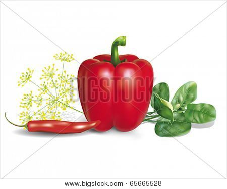 Red peppers with herbs. Vector eps 10.