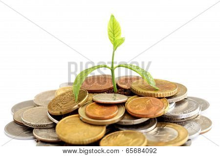 Green Tree Growing On Money Coins