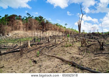 Deforestation in El Nido Palawan - Philippines