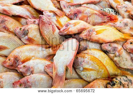 Red tilapia at the thailand fish market of samui island