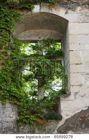 Unshaven with the grapevine the window in the castle Montresor. Loire Valley