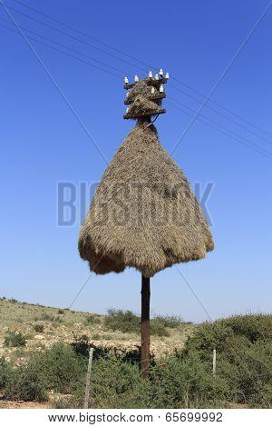 Giant Weaver bird nest