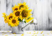 stock photo of sunflower  - Still Life - JPG