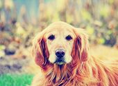 image of begging dog  - a cute dog done with a retro vintage instagram filter - JPG