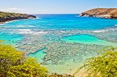 picture of swim meet  - day view of snorkeling tropical paradise Hanauma bay in Oahu - JPG