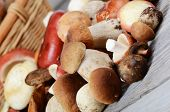 picture of boletus edulis  - The raw boletus edulis as a background - JPG