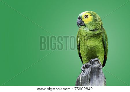 Green Parrot in Amazon on green background