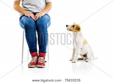 Cute dog with his owner