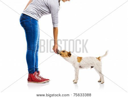 Unrecognizable woman feeding dog isolated