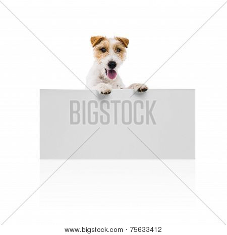Young dog above banner isolated