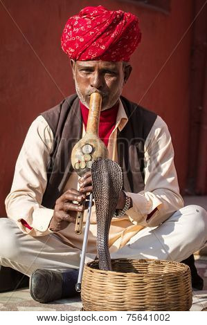JAIPUR, INDIA - NOVEMBER 28: A snake charmer is playing the flute for the cobra sitting by the wall in the Fort Amber on November 28, 2013 in Jaipur, India