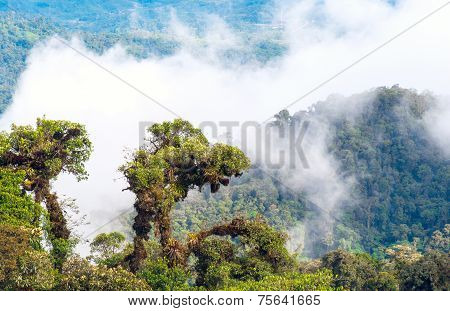 Tropical Rainforest, Ecuador