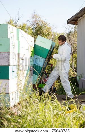 Full length young male beekeeper loading stacked honeycomb crates in truck