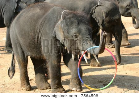 A Hula-Hooping Elephant