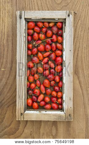 Wild Rose Hips In Small Window Frame