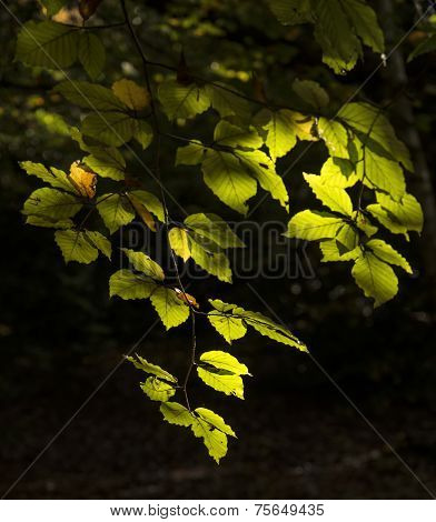 Beautiful sunlight Dappled Leaves In Fall Forest Landscape