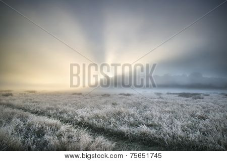Stunning Sun Beams Light Up Fog Through Thick Fog Of Autumn Fall Frosty Landscape