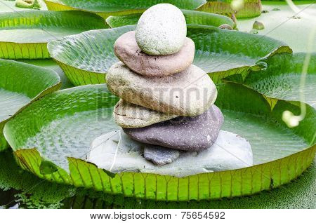 Victoria, Amazon Water Lily Leaves With Stone Tower