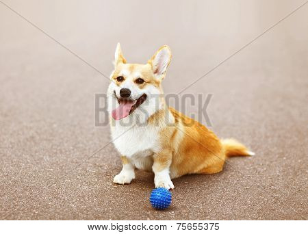 Funny Dog Playing With Ball