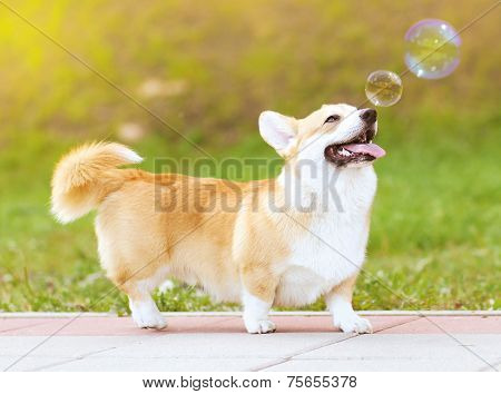 Happy Fun Dog And Soap Bubbles
