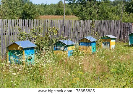 Multi-colored wooden beehives on a rural apiary