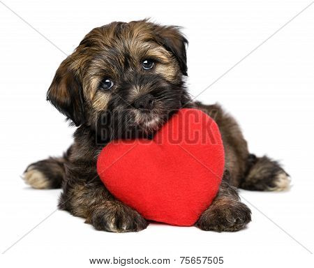 Lover Valentine Havanese Puppy Dog With A Red Heart