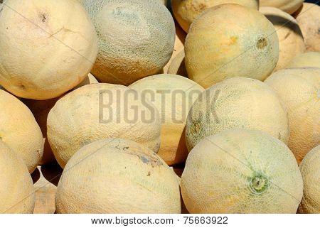 Cantaloupe for sale
