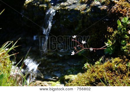 Small Flawers Over A Waterfall
