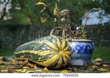 Still-life With A Big Zucchini And Falling Leaves