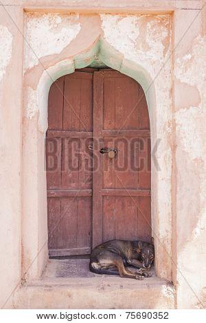 Dog Sleeping On A Door Step
