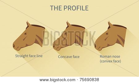 various face lines of a horse with description