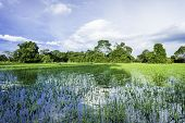 stock photo of wetland  - Pantanal in Mato Grosso - JPG
