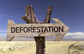 stock photo of deforestation  - Deforestation wooden sign with a desert background  - JPG
