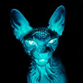 picture of animal x-ray  - X - JPG